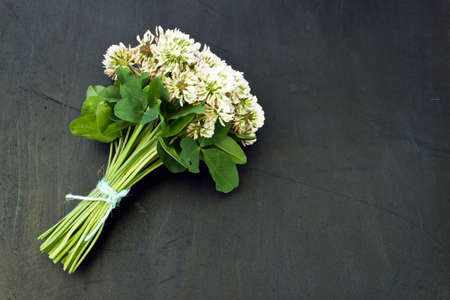 White clover (Trifolium repens) in a bouquet on a dark background