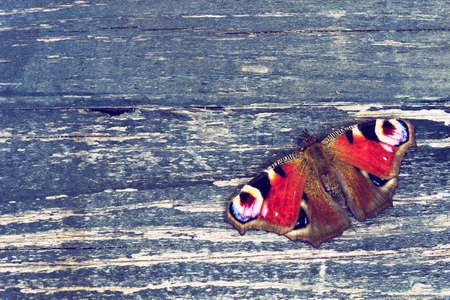 Butterfly (Aglais io) or peacock butterfly on textured wooden surface - vintage look