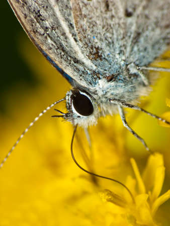 The butterfly is fed on a yellow flower -head detail