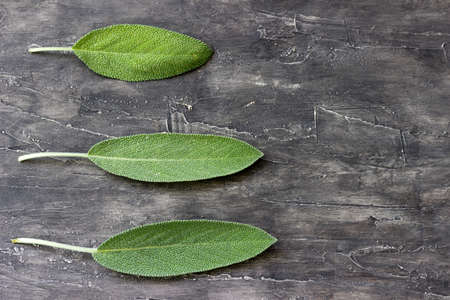 Fresh leaf of sage on a wooden surface