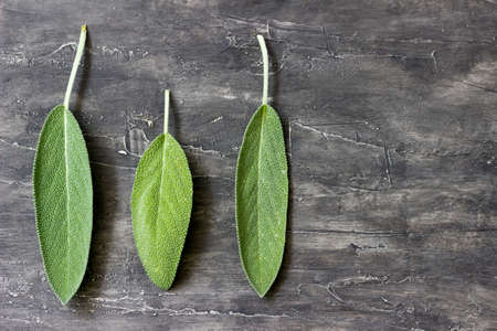 Three leaves of scented sage on a wooden background Stock Photo