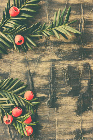 Christmas decoration. Evergreen tree branches with red berries on rusti wooden background Stock Photo
