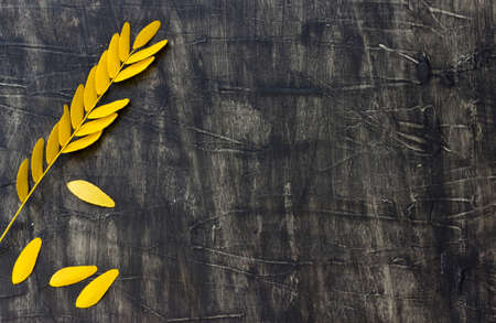 Autumn leaf acacia on a rustic wooden background Stock Photo