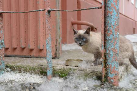 Gatto triste senzatetto sulla strada della città vicino a casa. Animale senza casa Archivio Fotografico