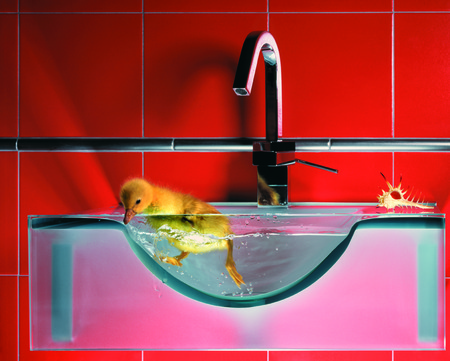 duckling swimming in clear water in a sink in a bathroom on a black background photo
