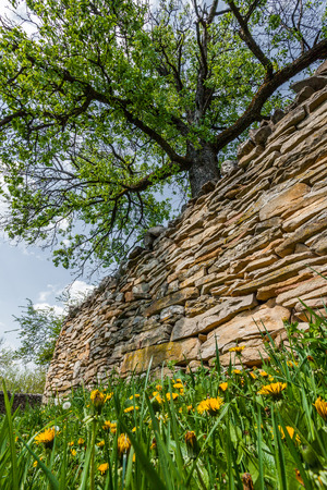 dry stone: A tree beside a dry stone wall Stock Photo