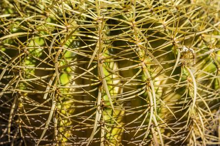 beware: Cactus close up Stock Photo
