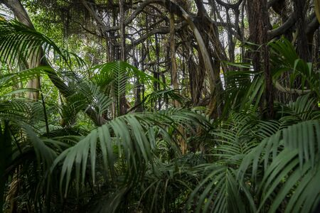 wild tropical vegetation with natural plants and greenery