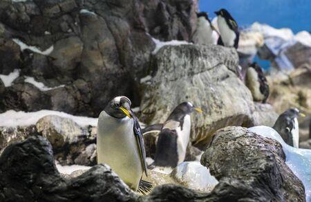 Planet Penguin Aquarium, Loro Parque, Tenerife, Canary Islands, Spain 写真素材