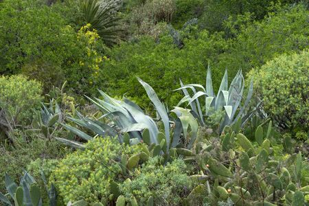 island vegetation with natural plants, greenery and cacti