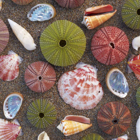 Sea urchins and shells on wet sand, natural background photo