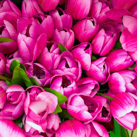 purple fake tulips, floral background photo