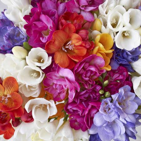 フリージアの花、自然な背景の饗宴 写真素材