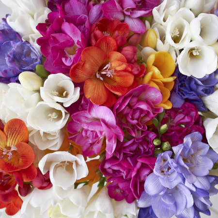 a feast of freesia flowers, natural background  photo