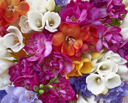a feast of freesia flowers, natural background
