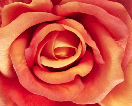 artficial rose, floral background photo