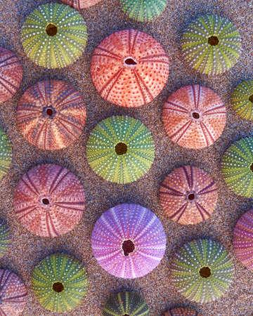 ビーチでカラフルなウニの様々 な 写真素材