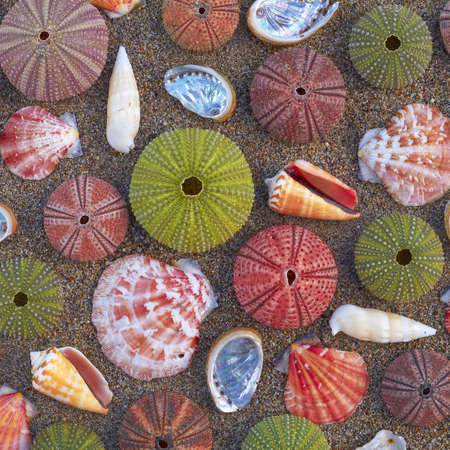 variety of colorful sea urchins and shells on the beach photo