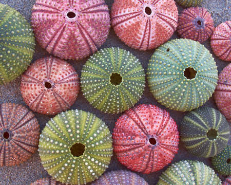 variety of colorful sea urchins on the beach photo