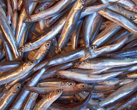 engraulis: fry  anchovy  for sale, natural background Stock Photo
