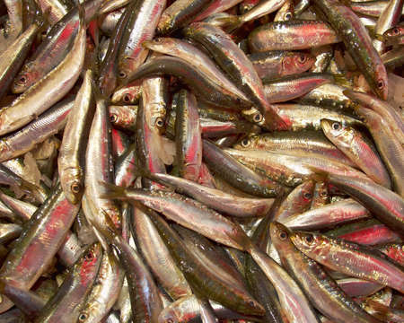 engraulis: anchovy catch for sale, natural background Stock Photo