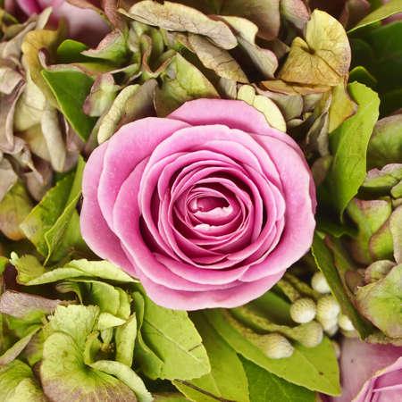 single rose: dark pink rose closeup on green background