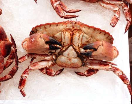central market: Primer plano de cangrejo rojo, en el mercado central