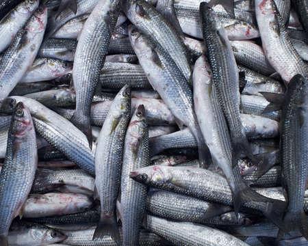flathead: flathead mullets fish, natural background Stock Photo