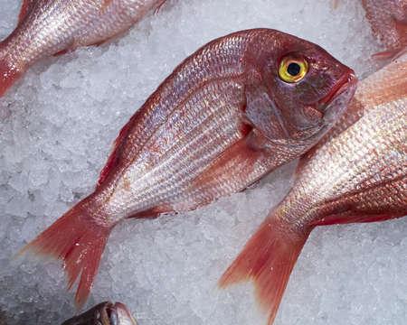 sea bream: fresh red sea bream Stock Photo