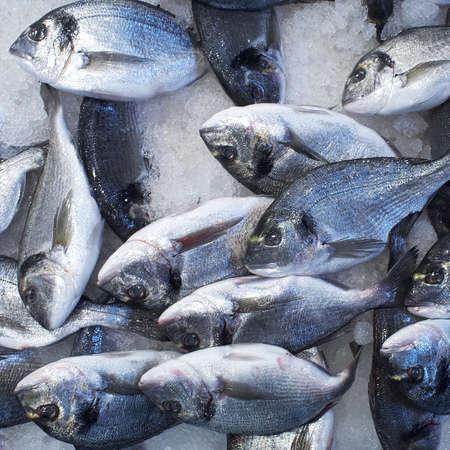 sparus: silver sea breams for sale