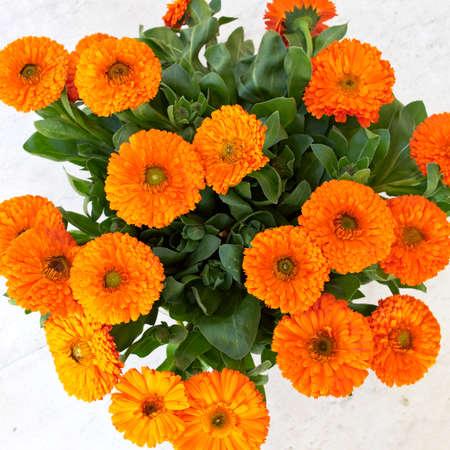 calendula flowers, natural background photo
