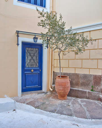 elegant house entrance with olive tree in flowerpot photo