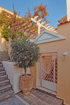 elegant house door and olive tree in huge jar photo