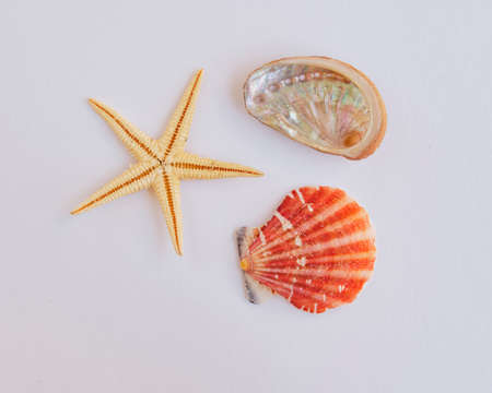 marine life on white background photo