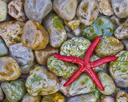 seastar: red seastar on colorful pebbles beach