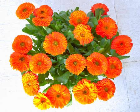 calendula flowers bouquet photo