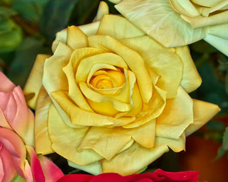 fake handmade yellow rose flower, colorful background photo