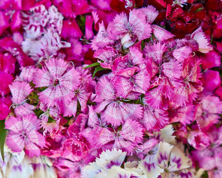 Chines small carnation flowers bouquet closeup photo