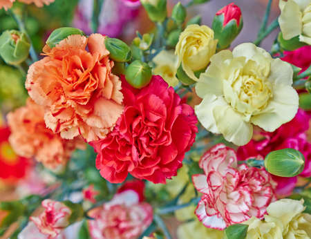 カラフルなカーネーションの花クローズ アップ自然な背景