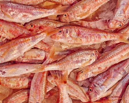 mullet: fresh mullet fish close up at the central market