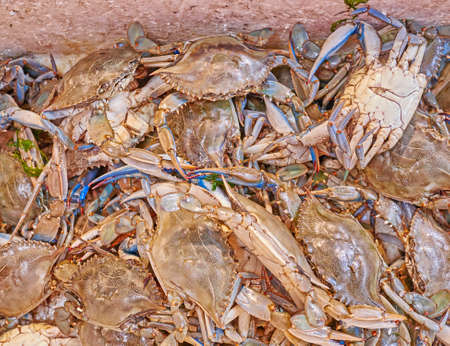 central market: fresh crabs close up at the central market