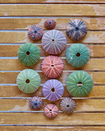 various colorful sea urchins on wooden background Stock Photo