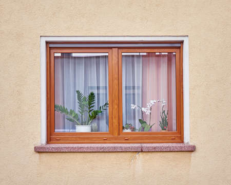 colored window: window with flowers on ocher colored wall