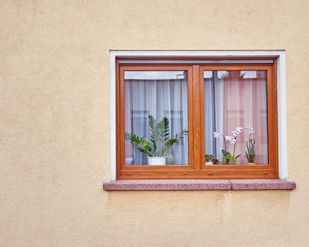 window with flowers on ocher colored wall