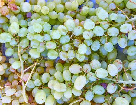 juicy: green organic grapes closeup, juicy background