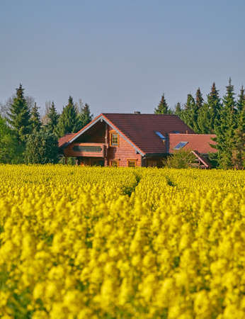 scenic view of a farmhouse and yellow fields under clear blue sky Stock Photo
