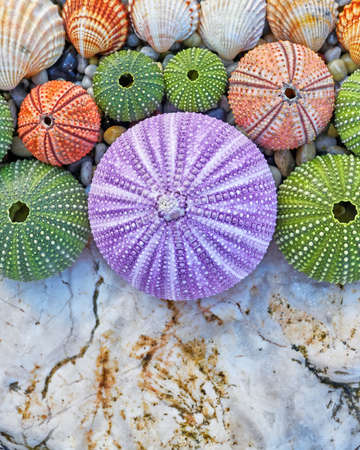 pebles: colorful sea urchins and shells on white rock and pebles beach