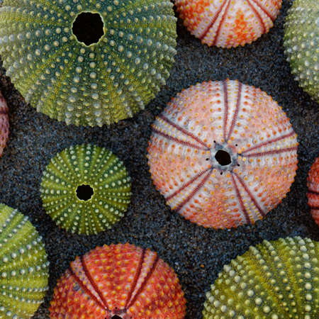 various colorful sea urchin shells on wet sand
