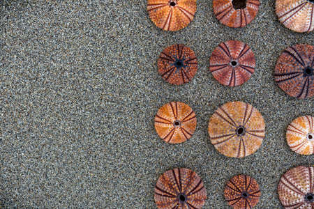 wet sand background with colorful sea urchins, space for typing