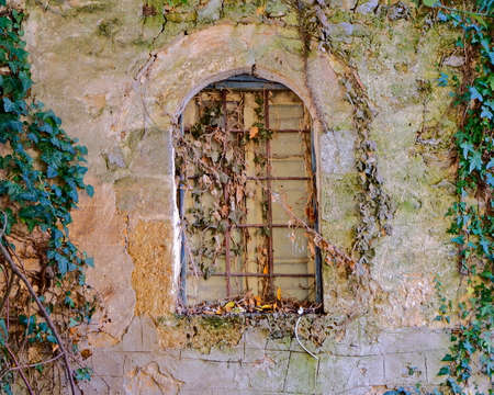 closed arched window on stone wall and ivy foliage